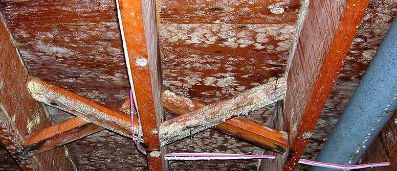 Attic Mold Removal Vancouver WA